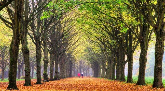 Selv korte turer i naturen er positivt for hjernen