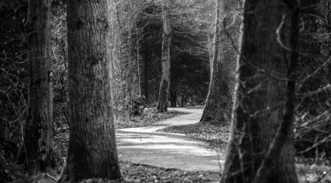 Skogssti svart hvitt